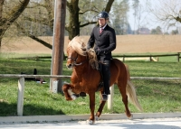 Mobile Reitschule!
